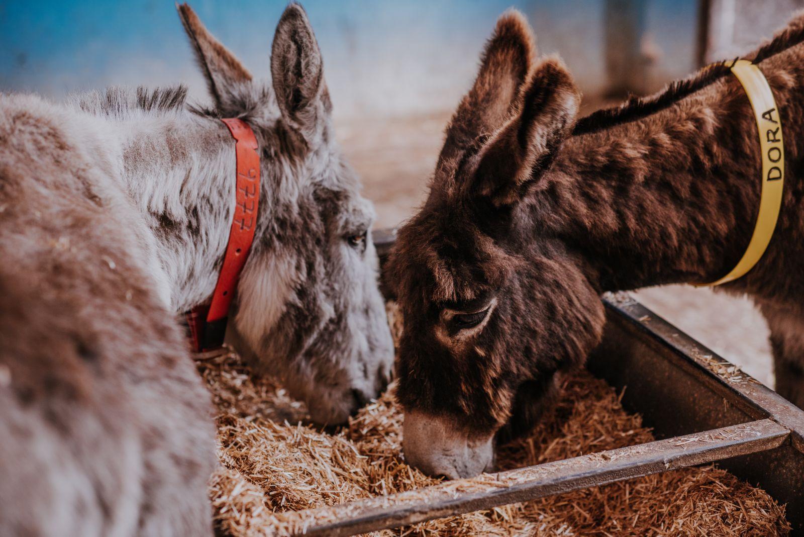 Voeding voor ezels Donkey Sanctuary