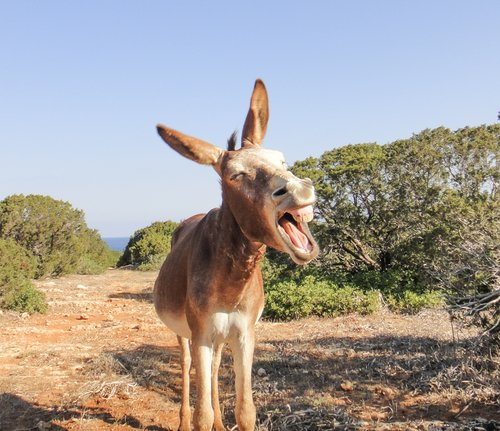 welk-geluid-maakt-een-ezel-donkey-sanctuary.b32f46.jpg