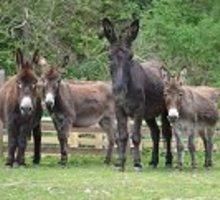 FAQ ezels