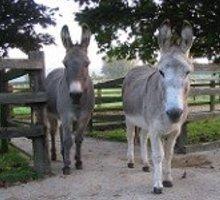 Stalling voor ezels