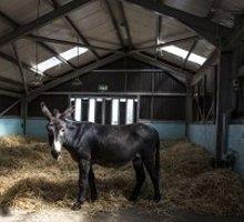 Huisvesting voor ezels