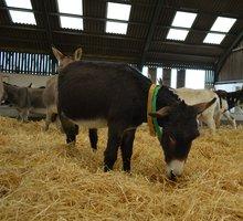 Voeding voor ezels